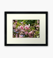 Boston Flowers Framed Print