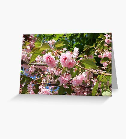 Boston Flowers Greeting Card