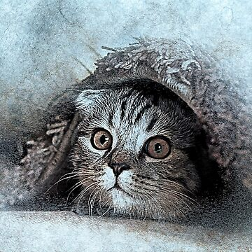 Kitten by belka