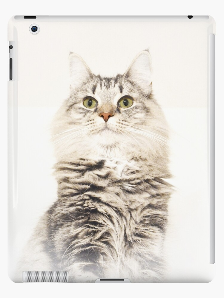 Norwegian Forest Cat iPad Case by Carol Bleasdale