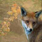 Foxy's world by ©FoxfireGallery / FloorOne Photography