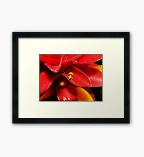 Red and Yellow bug Framed Print