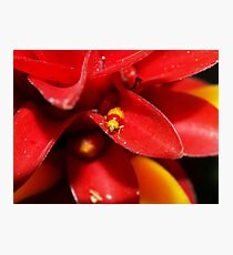 Red and Yellow bug Photographic Print