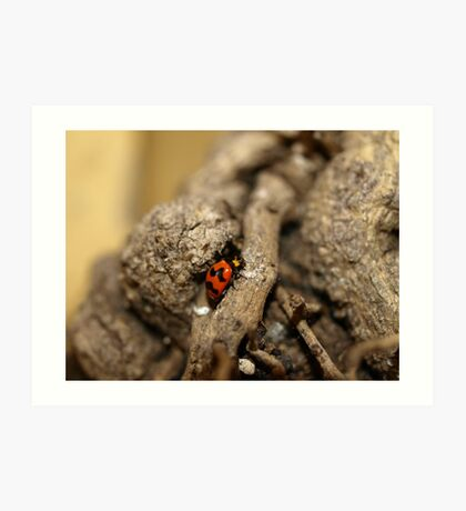 Lady beetle Art Print