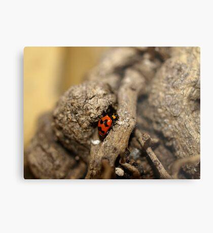 Lady beetle Metal Print