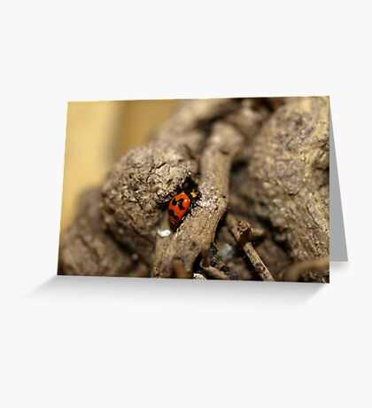 Lady beetle Greeting Card