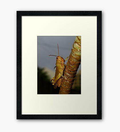 Wet Cricket Framed Print