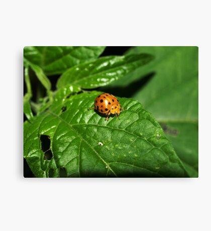 Fake Lady Beetle Canvas Print