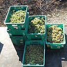 Malta Farm Collection:  Grape Harvest - NO 1 The grapes by DeborahDinah
