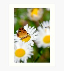 Flowers and Butterfly Art Print