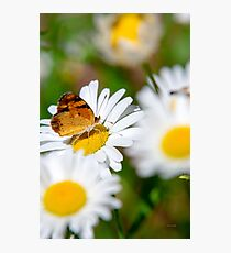 Flowers and Butterfly Photographic Print