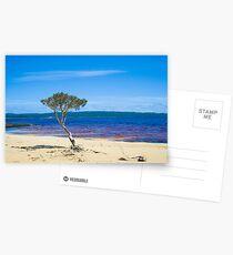 Lone tree at Broke Inlet Postcards