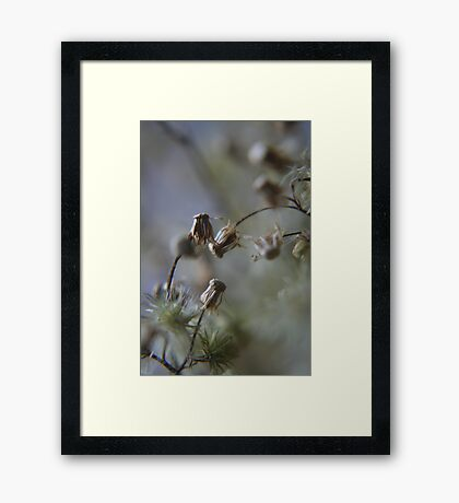 Gentle dance (from wild flowers collection)  Framed Print