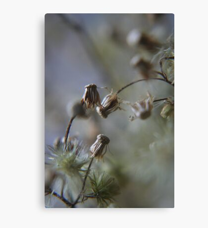 Gentle dance (from wild flowers collection)  Canvas Print