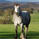 Happy Horse by Clare McClelland