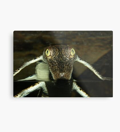 You Lookin at Me Metal Print