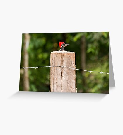 Let me out of here! Greeting Card