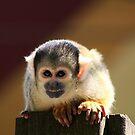 Squirrel Monkey by Anne-Marie Bokslag