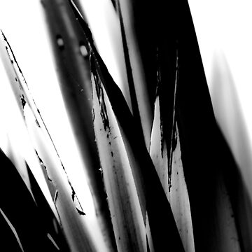 Beach Flax 2 bw by lisa-jayne