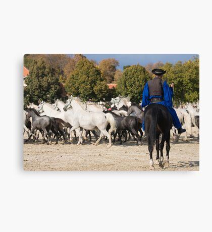 Lipica open day, Slovenia Canvas Print