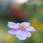 """"""" Summer Cosmos Dream """" by Richard Couchman"""