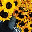 Sunflower Buckets by Rebecca Cozart