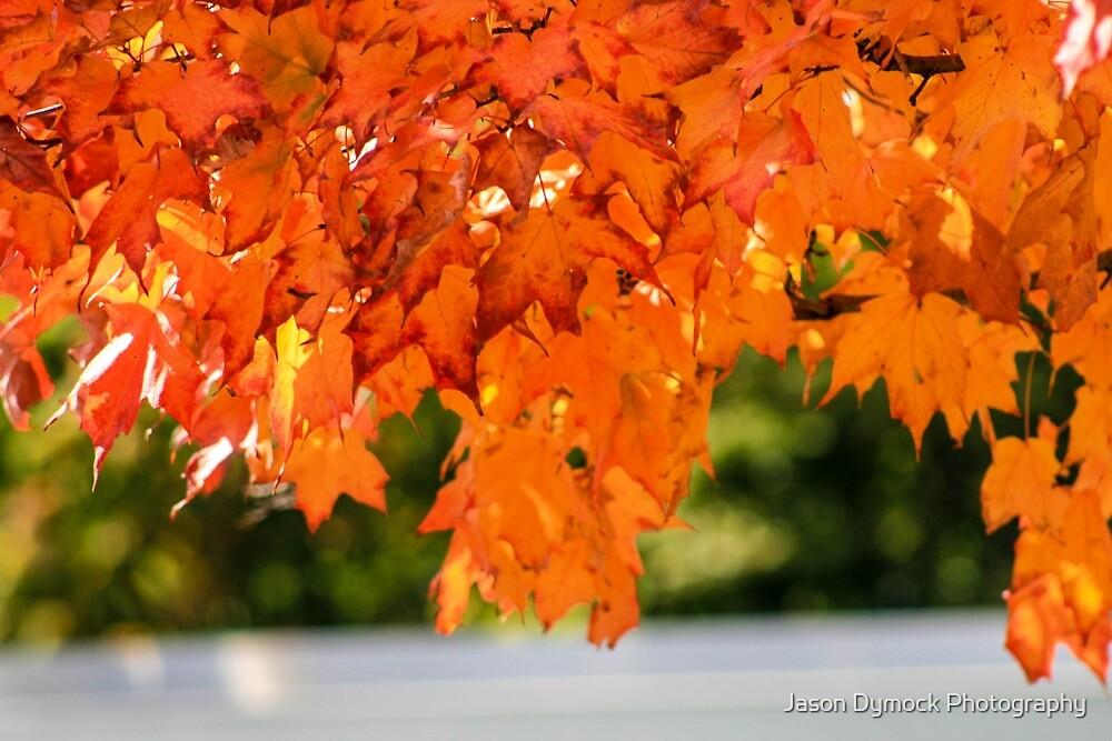 Fall by Jason Dymock Photography
