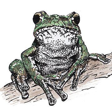 Tasmanian Tree Frog by SnakeArtist