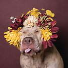 Flower Power, Walter being silly by Sophie Gamand