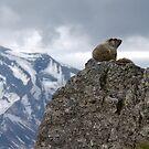 Marmot on Mountain by Gene  Tewksbury
