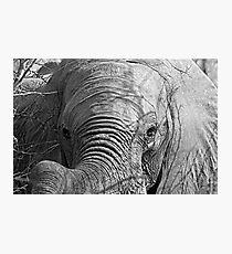 Elephant Stare Photographic Print