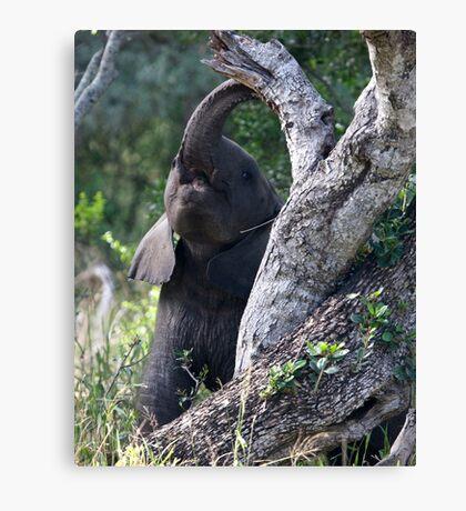 Baby Elephant Peekaboo Canvas Print