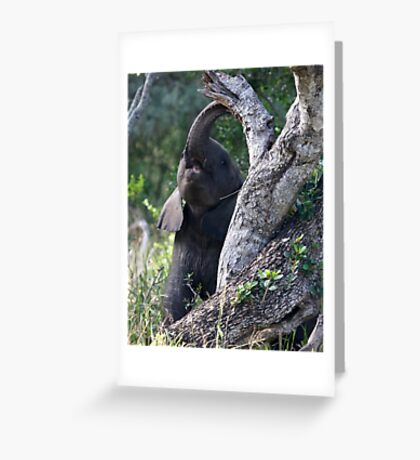 Baby Elephant Peekaboo Greeting Card