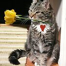 Cat holding a rose by Istvan Hernadi