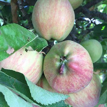 Triple apple  by cmoartist2012