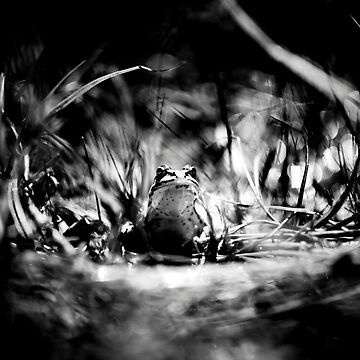 Frogger - Black & White by arc1