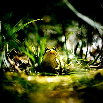Frogger - High Contrast by arc1