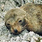 Wild Baby Seal by sienebrowne