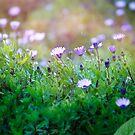 Purple bliss by Melissa Dickson