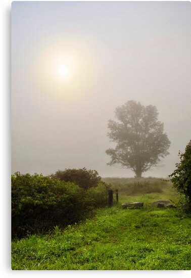 Tree in Fog by Christina Rollo