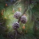 3 Pines by Melissa Dickson
