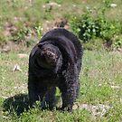 Black bear shake by Jim Cumming