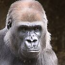 Mumma Gorilla by Steve Bullock
