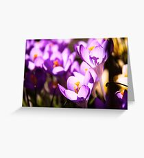 Stained glass petals Greeting Card