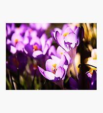 Stained glass petals Photographic Print