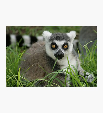 King Julien Photographic Print