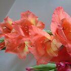 Sword lily 2 by Ana Belaj
