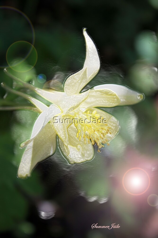 Magical Columbine ~ Must Be Fairies by SummerJade