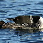 Loon Yoga Master by Heather King