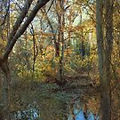 Looking through the trees I saw by John Rivera
